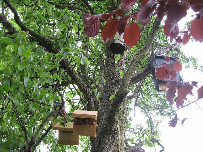 mein naturgarten - der kleingarten als biotop, Garten und erstellen