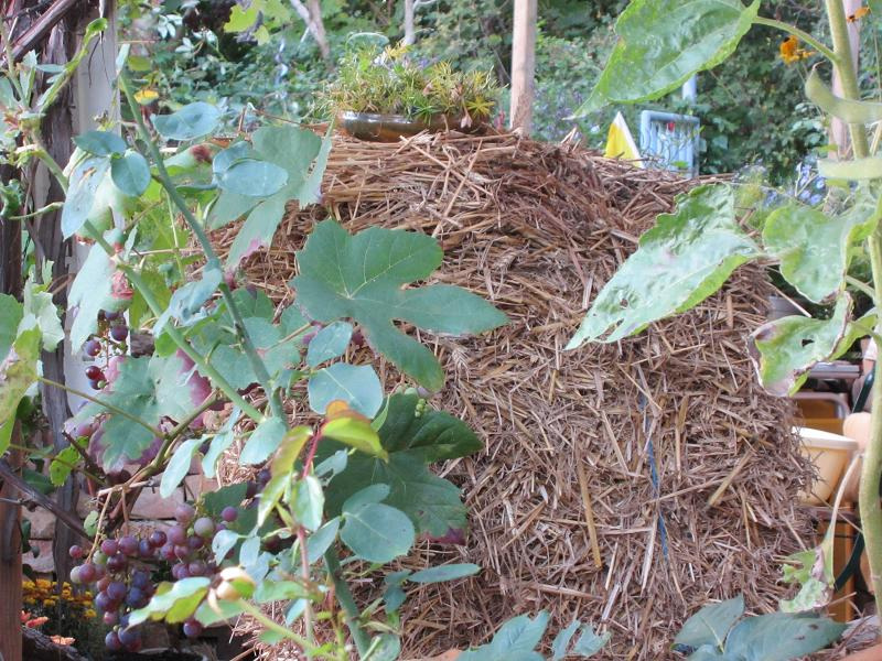 mein naturgarten der kleingarten als biotop. Black Bedroom Furniture Sets. Home Design Ideas